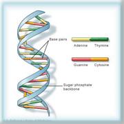 ДНК, молекула, генетика, происхождение, евреи, наследственность